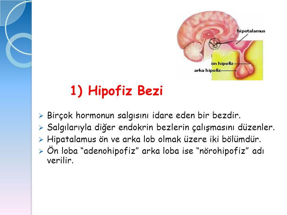1) Hipofiz Bezi  Birçok hormonun salgısını idare eden bir bezdir.  Salgılarıyla diğer endokrin bezlerin çalışmasını düzenler.  Hipatalamus ön ve ar