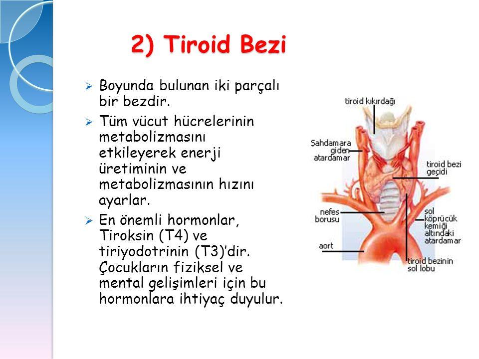 2) Tiroid Bezi 2) Tiroid Bezi  Boyunda bulunan iki parçalı bir bezdir.  Tüm vücut hücrelerinin metabolizmasını etkileyerek enerji üretiminin ve meta