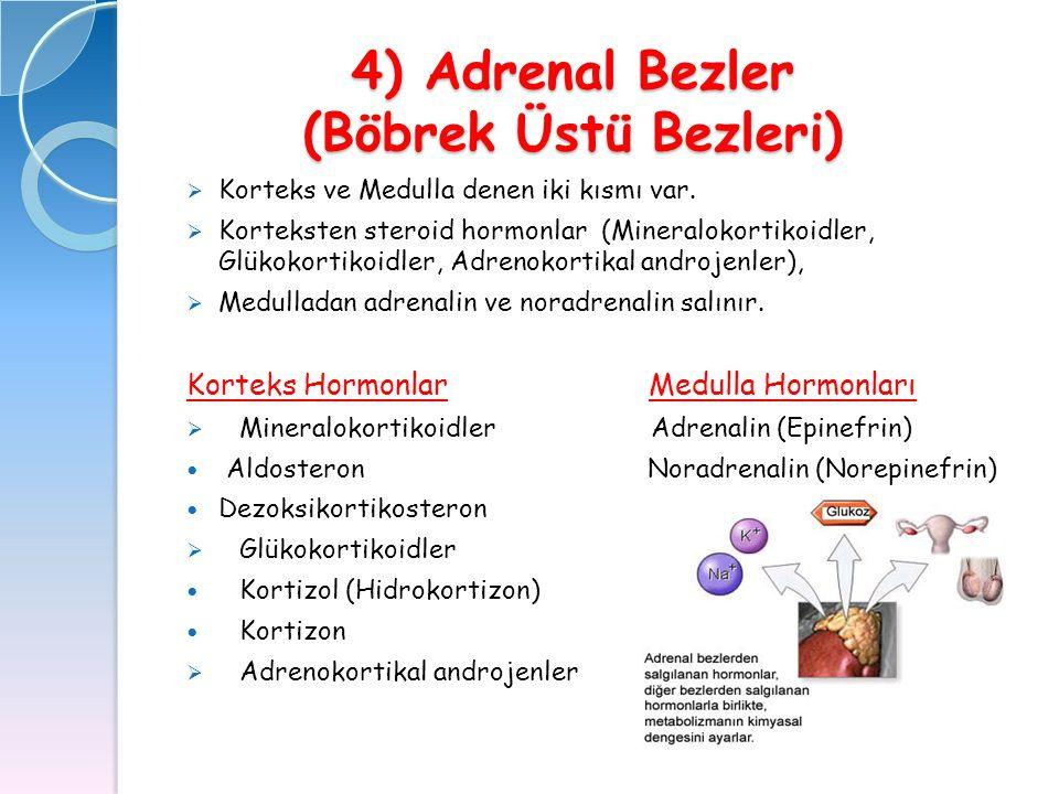 4) Adrenal Bezler (Böbrek Üstü Bezleri)  Korteks ve Medulla denen iki kısmı var.  Korteksten steroid hormonlar (Mineralokortikoidler, Glükokortikoid