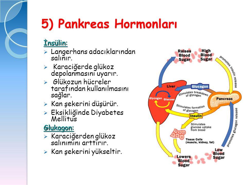 5) Pankreas Hormonları İnsülin:  Langerhans adacıklarından salınır.  Karaciğerde glükoz depolanmasını uyarır.  Glükozun hücreler tarafından kullanı
