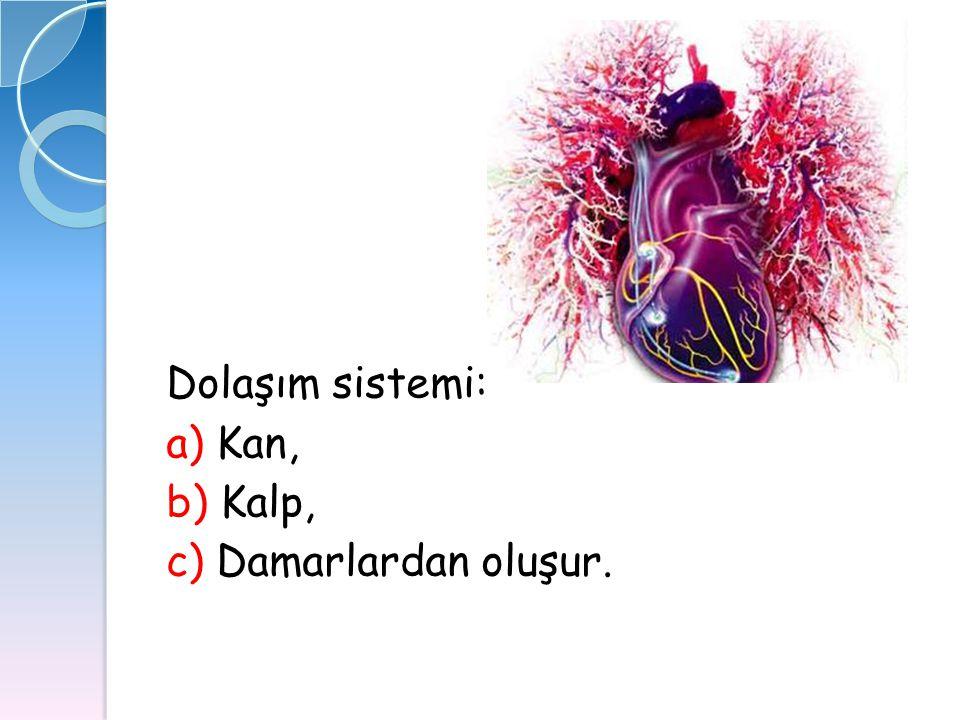 Dolaşım sistemi: a) Kan, b) Kalp, c) Damarlardan oluşur.