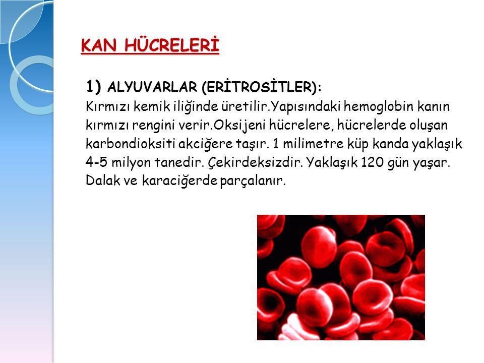 KAN HÜCRELERİ 1) ALYUVARLAR (ERİTROSİTLER): Kırmızı kemik iliğinde üretilir.Yapısındaki hemoglobin kanın kırmızı rengini verir.Oksijeni hücrelere, hüc