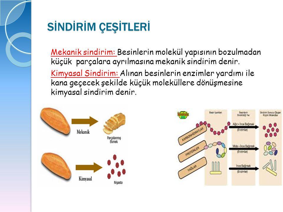 ENDOKRİN BEZLER ENDOKRİN BEZLER  Hipofiz bezi  Tiroid bezi  Paratiroid bezi  Adrenal Bez (Böbrek Üstü Bezleri)  Pankreasın Langerhans adacıkları  Testis ve ovaryum cinsellik bezleri