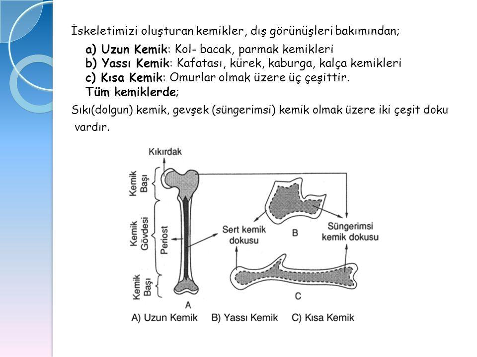 İskeletimizi oluşturan kemikler, dış görünüşleri bakımından; a) Uzun Kemik: Kol- bacak, parmak kemikleri b) Yassı Kemik: Kafatası, kürek, kaburga, kal