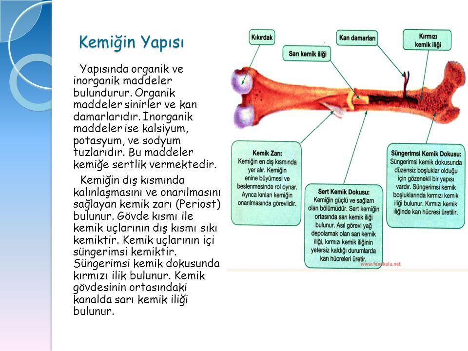 Kemiğin Yapısı Yapısında organik ve inorganik maddeler bulundurur. Organik maddeler sinirler ve kan damarlarıdır. İnorganik maddeler ise kalsiyum, pot