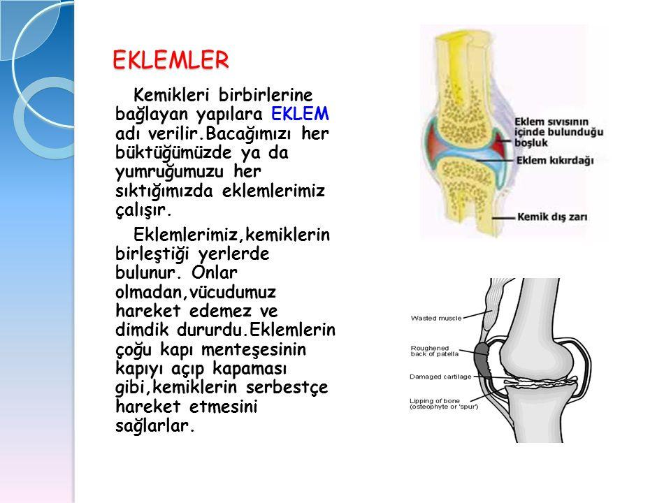 EKLEMLER Kemikleri birbirlerine bağlayan yapılara EKLEM adı verilir.Bacağımızı her büktüğümüzde ya da yumruğumuzu her sıktığımızda eklemlerimiz çalışı