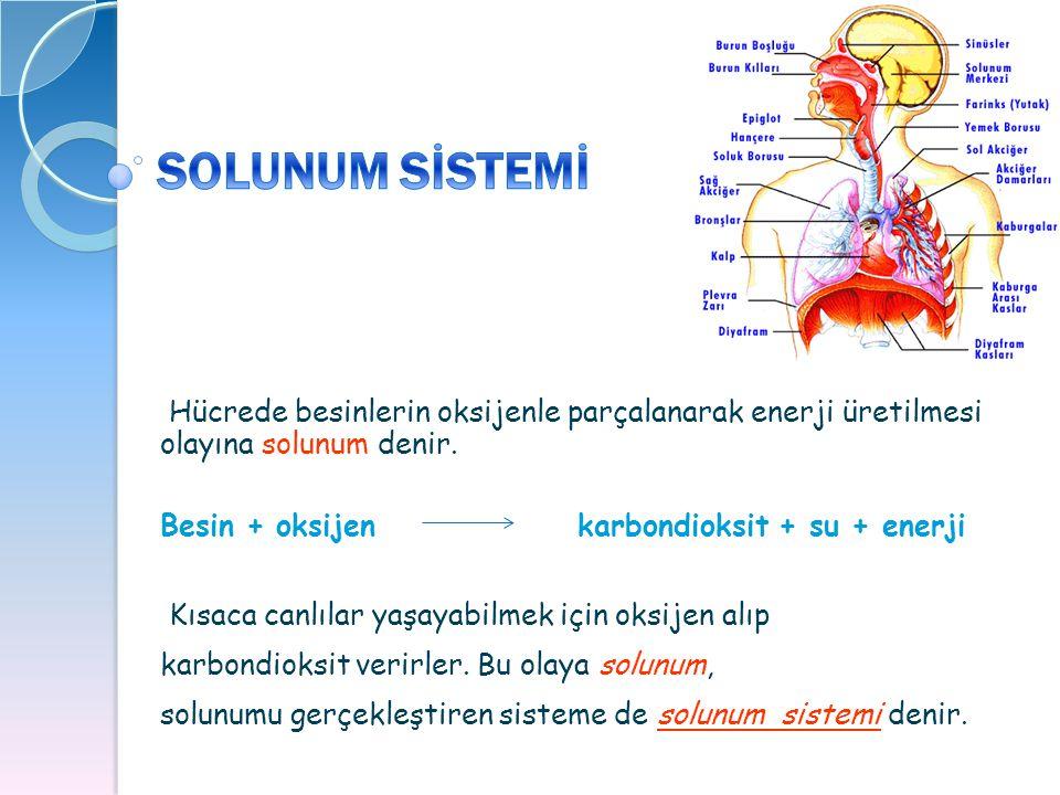 Hücrede besinlerin oksijenle parçalanarak enerji üretilmesi olayına solunum denir. Besin + oksijen karbondioksit + su + enerji Kısaca canlılar yaşayab