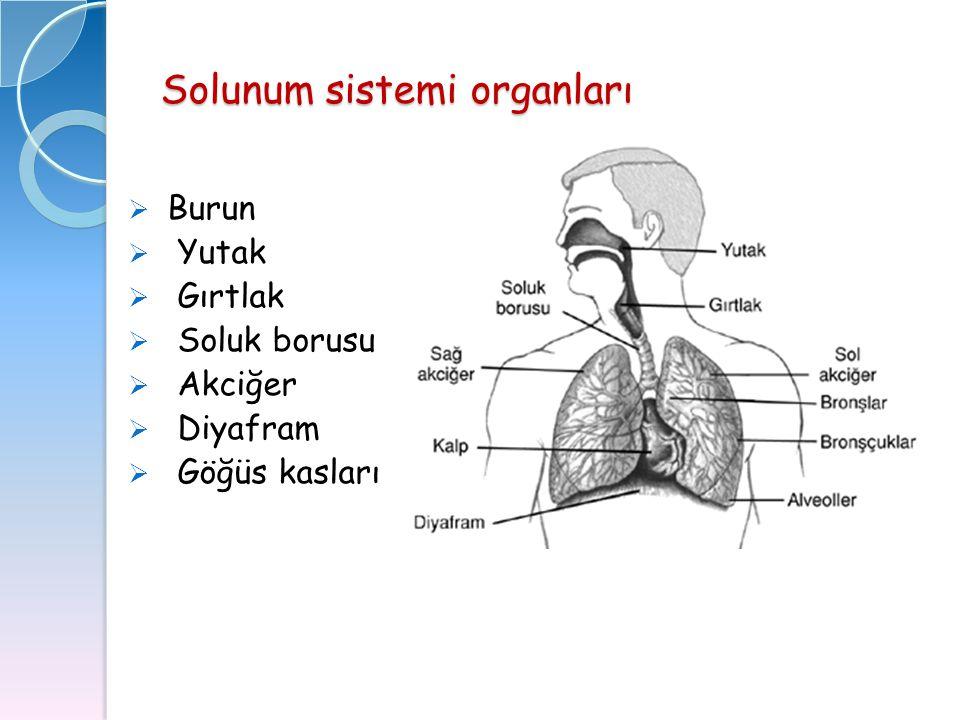 Solunum sistemi organları  Burun  Yutak  Gırtlak  Soluk borusu  Akciğer  Diyafram  Göğüs kasları
