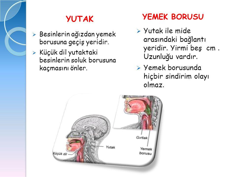 MİDE  Sindirim sisteminin en geniş organıdır.