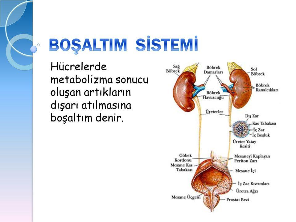 Hücrelerde metabolizma sonucu oluşan artıkların dışarı atılmasına boşaltım denir.