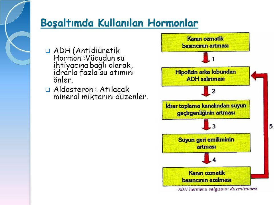 Boşaltımda Kullanılan Hormonlar  ADH (Antidiüretik Hormon :Vücudun su ihtiyacına bağlı olarak, idrarla fazla su atımını önler.  Aldosteron : Atılac