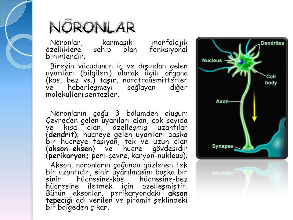 Nöronlar, karmaşık morfolojik özelliklere sahip olan fonksiyonal birimlerdir. Nöronlar, karmaşık morfolojik özelliklere sahip olan fonksiyonal birimle