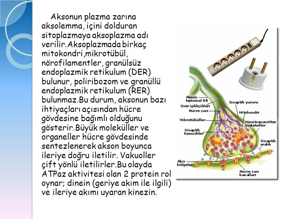 Aksonun plazma zarına aksolemma, içini dolduran sitoplazmaya aksoplazma adı verilir.Aksoplazmada birkaç mitokondri,mikrotübül, nörofilamentler, granül