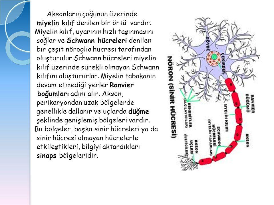 Aksonların çoğunun üzerinde miyelin kılıf denilen bir örtü vardır. Miyelin kılıf, uyarının hızlı taşınmasını sağlar ve Schwann hücreleri denilen bir ç