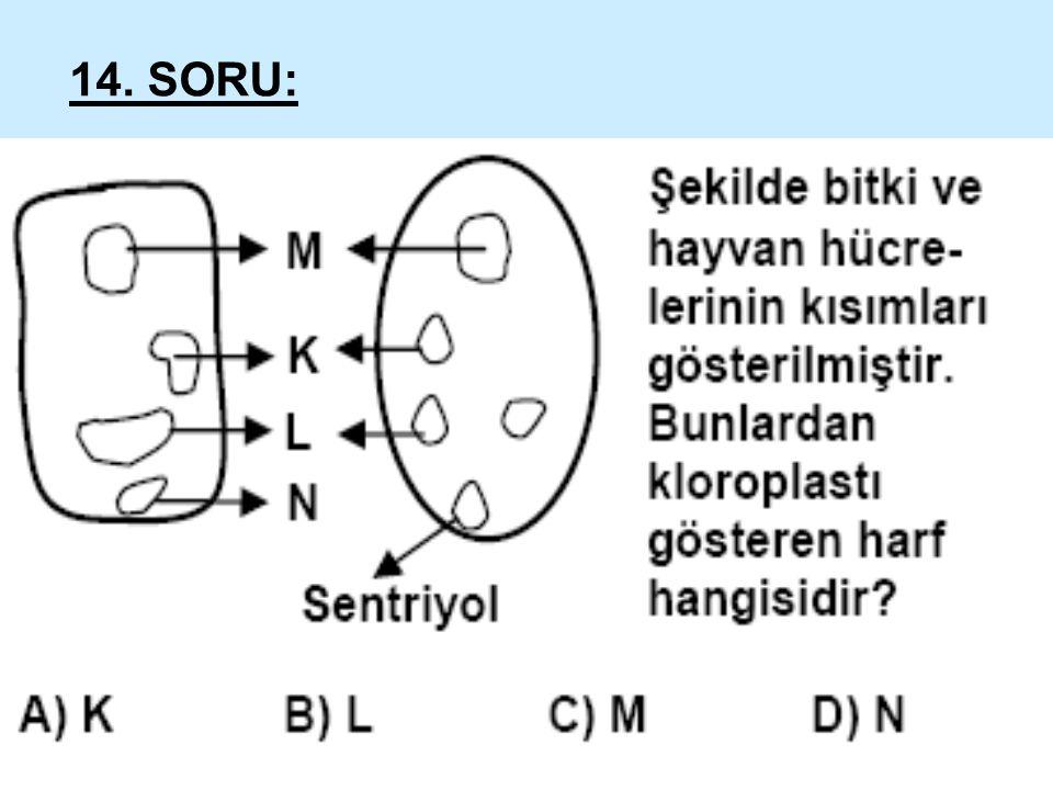 14. SORU: