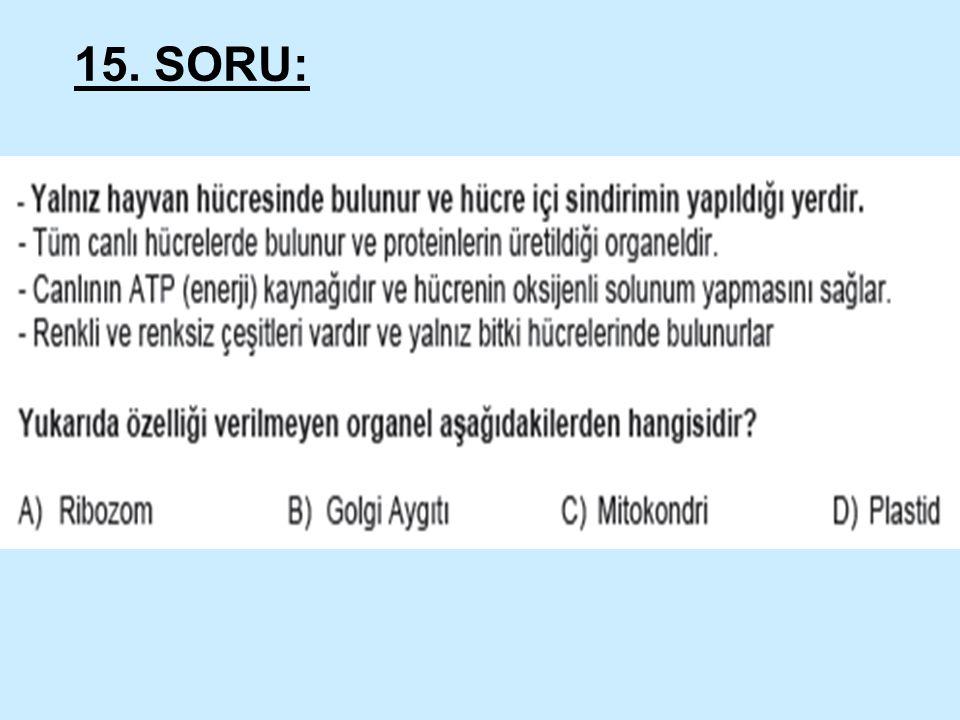 15. SORU: