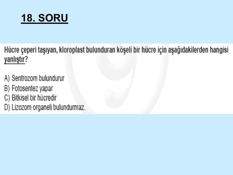 18. SORU