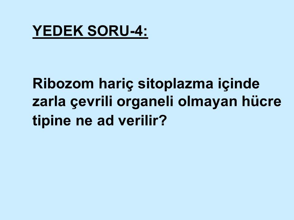 YEDEK SORU-4: Ribozom hariç sitoplazma içinde zarla çevrili organeli olmayan hücre tipine ne ad verilir?