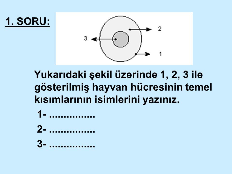 1. SORU: Yukarıdaki şekil üzerinde 1, 2, 3 ile gösterilmiş hayvan hücresinin temel kısımlarının isimlerini yazınız. 1-................ 2-.............