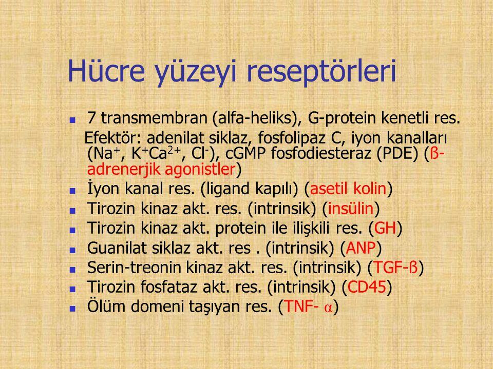Hücre yüzeyi reseptörleri 7 transmembran (alfa-heliks), G-protein kenetli res.