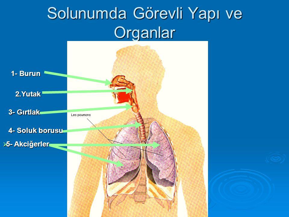 Solunumda Görevli Yapı ve Organlar 1- Burun 2.Yutak 3- Gırtlak 4- Soluk borusu  5- Akciğerler