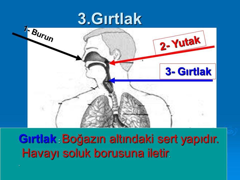 3.Gırtlak 1- Burun 2- Yutak Gırtlak : Boğazın altındaki sert yapıdır.