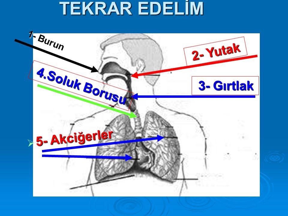 TEKRAR EDELİM 1- Burun 2- Yutak 3- Gırtlak 4.Soluk Borusu 5- Akciğerler  5- Akciğerler