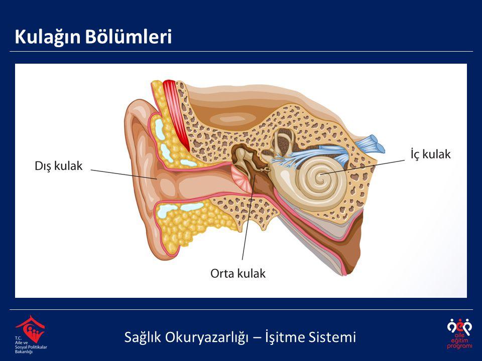 Kulağın Bölümleri – Dış Kulak Sağlık Okuryazarlığı – İşitme Sistemi  Kulak kepçesi, dış kulak yolu ve kulak zarından meydana gelir.