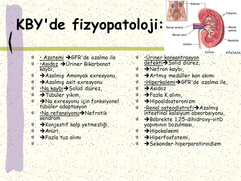 KBY'de Tedavi:Anemi: Anemi yetersiz Eritropoetin üretimi sonucu olmakla birlikte yetersiz Fe-Folik asit alımı gözardı edilmemelidir.