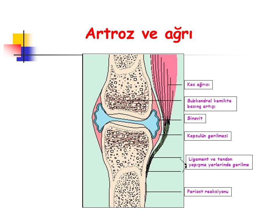 Kas ağrısı Subkondral kemikte basınç artışı Sinovit Kapsulün gerilmesi Ligament ve tendon yapışma yerlerinde gerilme Periost reaksiyonu Artroz ve ağrı