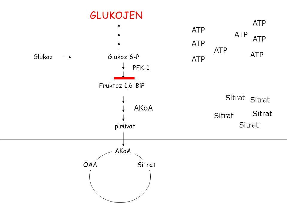 GlukozGlukoz 6-P Fruktoz 1,6-BiP PFK-1 pirüvat AKoA OAASitrat ATP AKoA Sitrat GLUKOJEN
