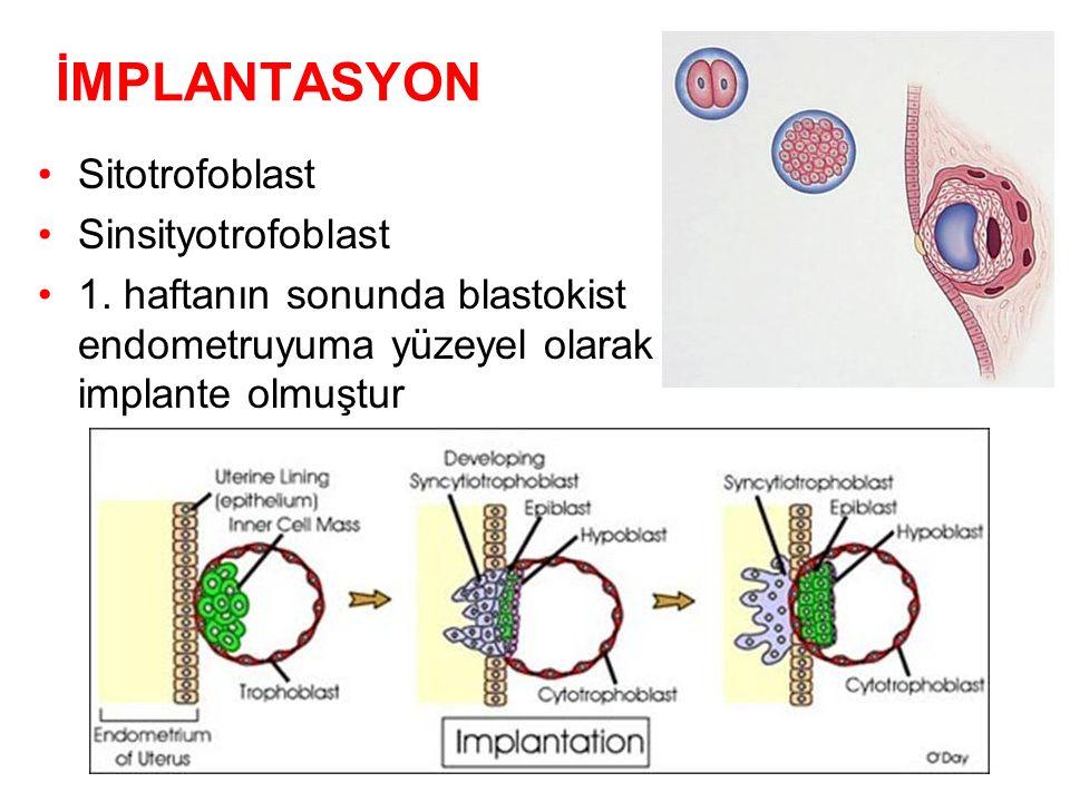 İMPLANTASYON Sitotrofoblast Sinsityotrofoblast 1.