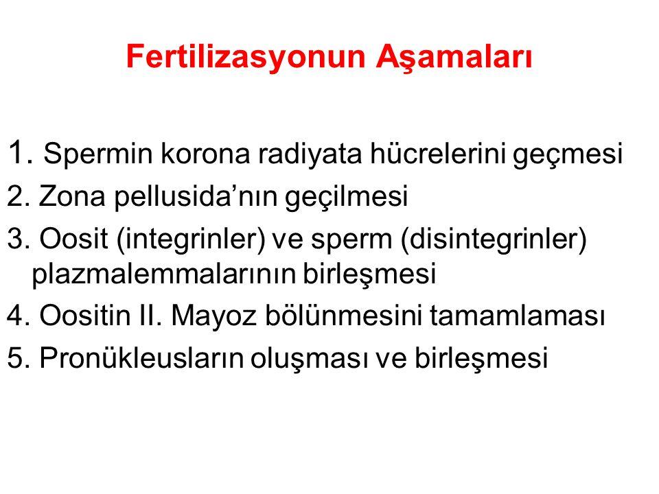 Fertilizasyonun Aşamaları 1.Spermin korona radiyata hücrelerini geçmesi 2.