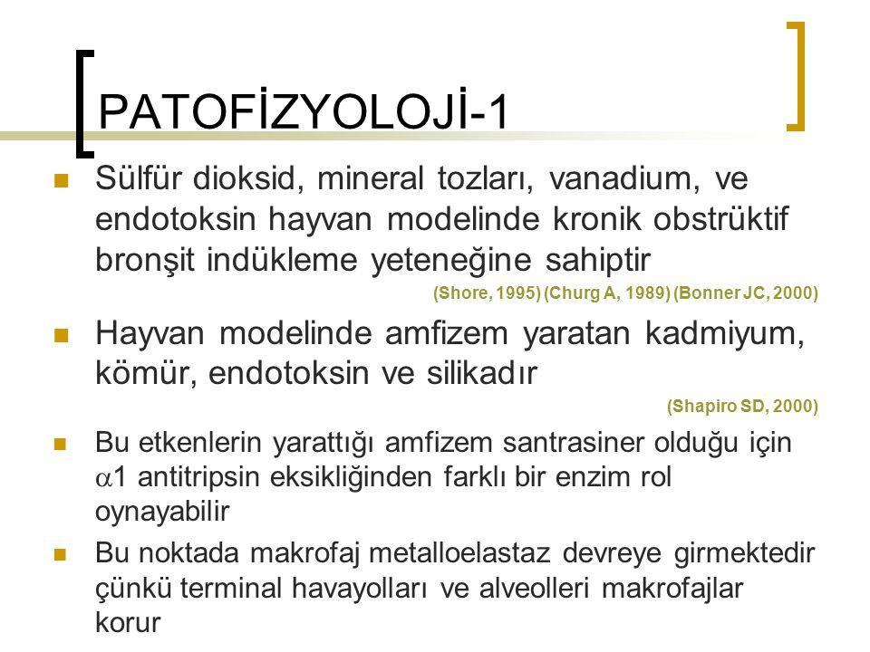 PATOFİZYOLOJİ-1 Sülfür dioksid, mineral tozları, vanadium, ve endotoksin hayvan modelinde kronik obstrüktif bronşit indükleme yeteneğine sahiptir (Sho