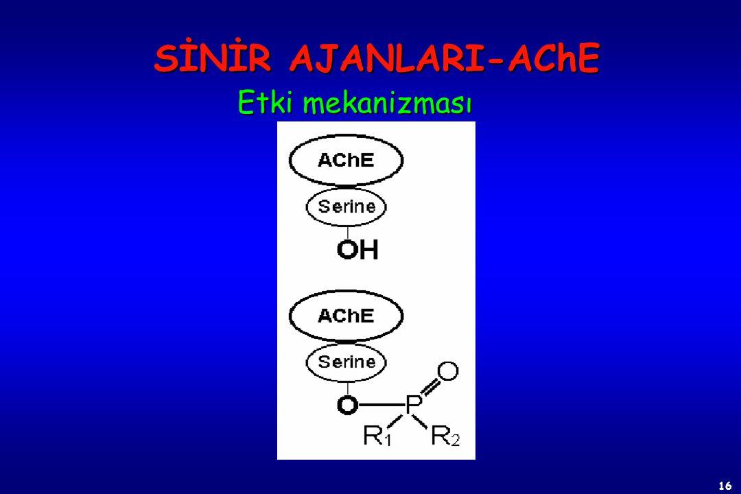 15 ASETİLKOLİN (Ach)  Asetilkolin (Ach), sinir uçlarından salgılanan bir nörotransmitterdir. Kolin transferaz enzimi ile kolin ve asetilkoenzim A'dan