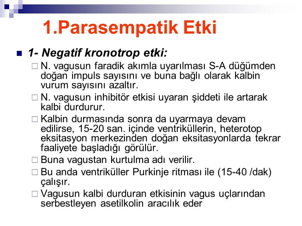 1.Parasempatik Etki 1- Negatif kronotrop etki:  N. vagusun faradik akımla uyarılması S-A düğümden doğan impuls sayısını ve buna bağlı olarak kalbin v
