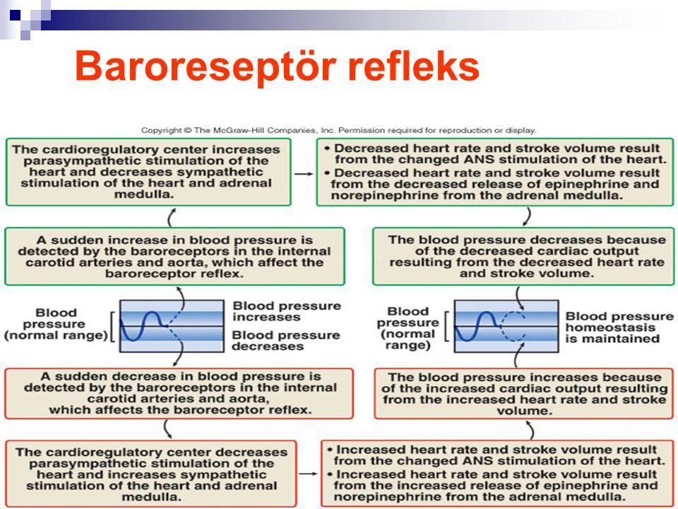 Baroreseptör refleks