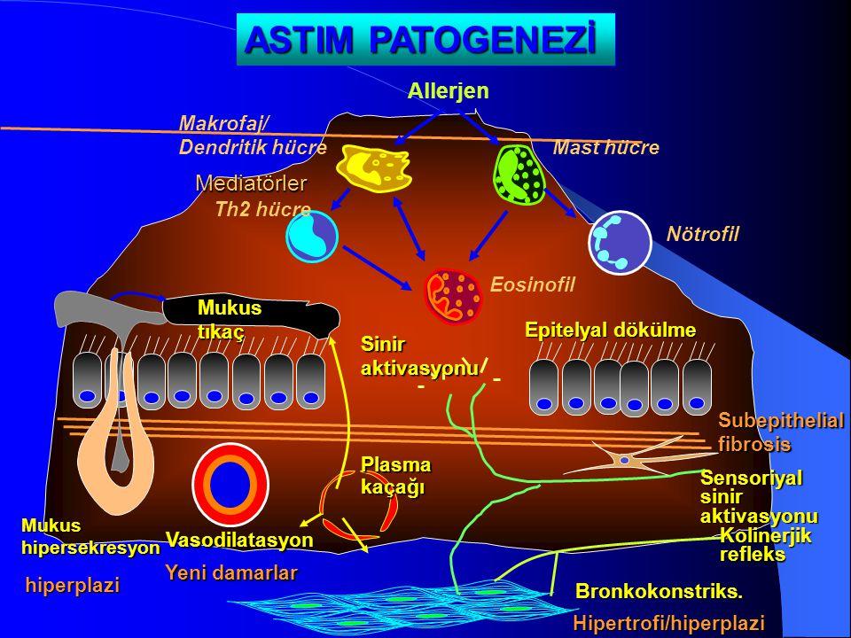 ASTIM PATOGENEZİ Mediatörler SubepithelialfibrosisHipertrofi/hiperplazi Yeni damarlar hiperplazi Eosinofil Mast hücre Allerjen Th2 hücre Nötrofil Makr