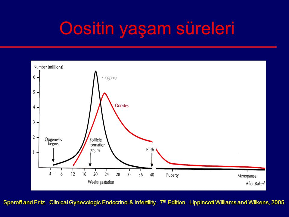 Oositin yaşam süreleri Speroff and Fritz. Clinical Gynecologic Endocrinol & Infertility. 7 th Edition. Lippincott Williams and Wilkens, 2005.