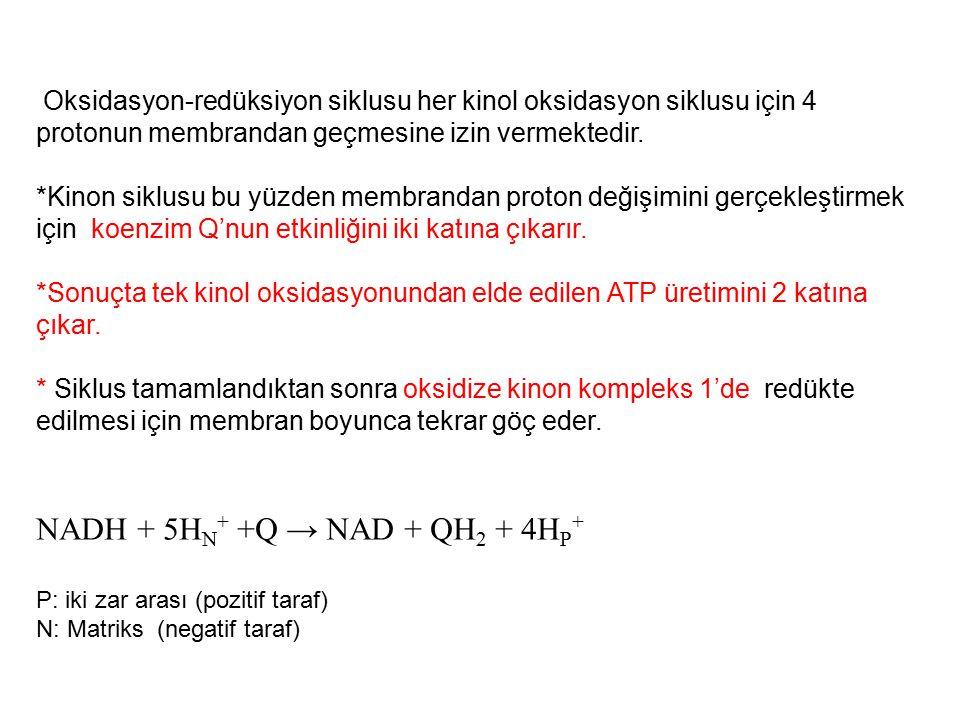 Oksidasyon-redüksiyon siklusu her kinol oksidasyon siklusu için 4 protonun membrandan geçmesine izin vermektedir. *Kinon siklusu bu yüzden membrandan
