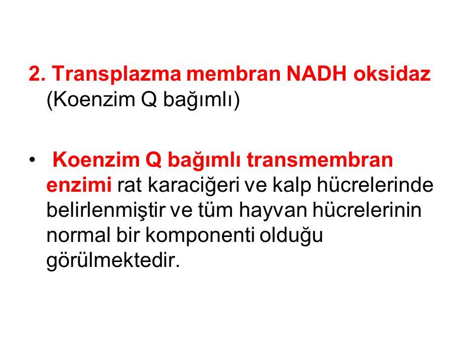 2. Transplazma membran NADH oksidaz (Koenzim Q bağımlı) Koenzim Q bağımlı transmembran enzimi rat karaciğeri ve kalp hücrelerinde belirlenmiştir ve tü