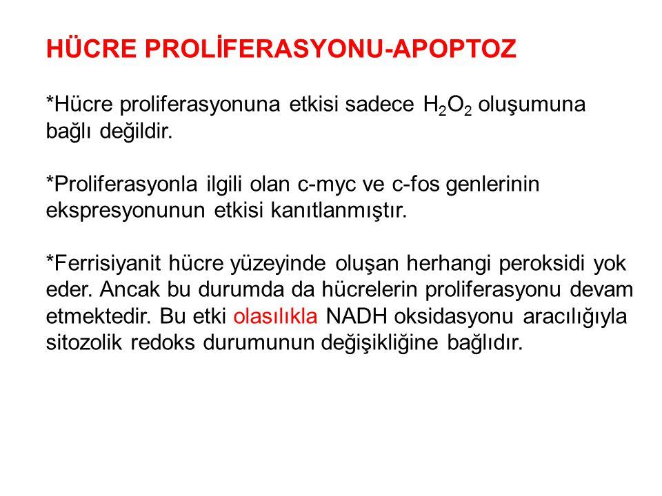 HÜCRE PROLİFERASYONU-APOPTOZ *Hücre proliferasyonuna etkisi sadece H 2 O 2 oluşumuna bağlı değildir. *Proliferasyonla ilgili olan c-myc ve c-fos genle