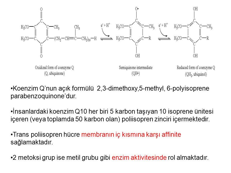 Koenzim Q'nun açık formülü 2,3-dimethoxy,5-methyl, 6-polyisoprene parabenzoquinone'dur. İnsanlardaki koenzim Q10 her biri 5 karbon taşıyan 10 isoprene