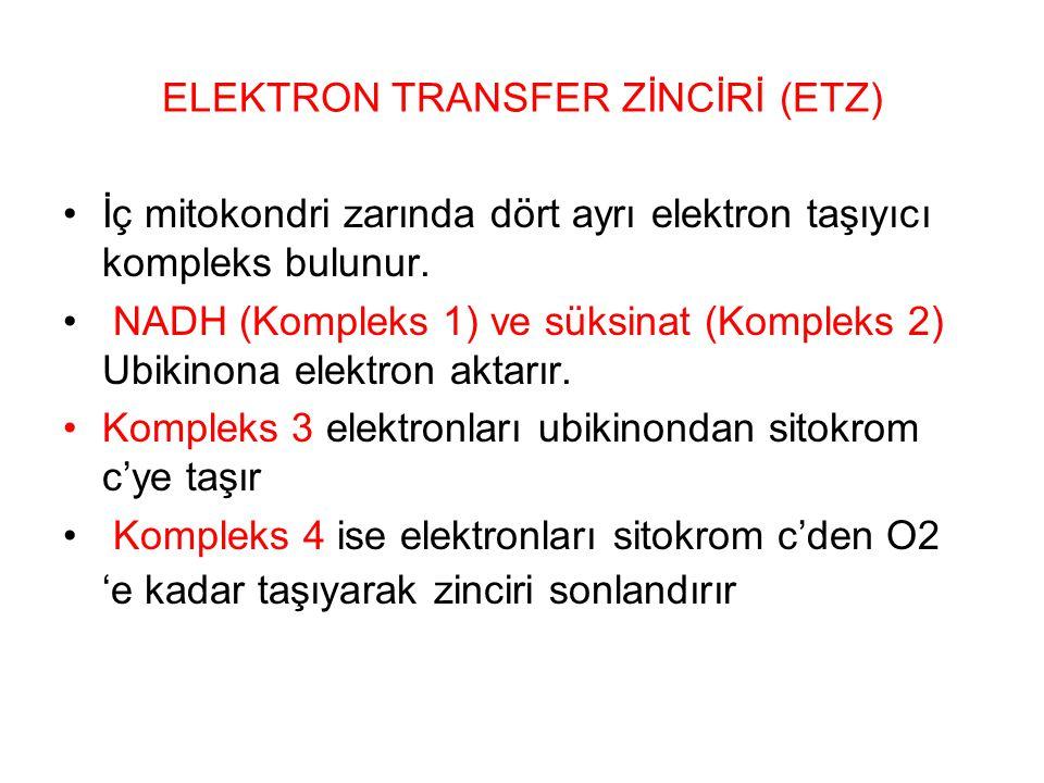 ELEKTRON TRANSFER ZİNCİRİ (ETZ) İç mitokondri zarında dört ayrı elektron taşıyıcı kompleks bulunur. NADH (Kompleks 1) ve süksinat (Kompleks 2) Ubikino