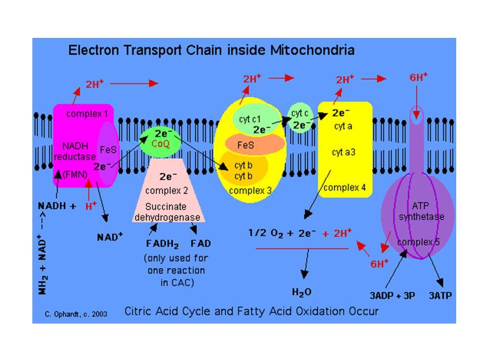 Biyosentezdeki azalmaya ek olarak kinon hareketine engel olan membran lipidlerindeki değişimi ve yıkımındaki artış koenzim Q'nun fonksiyon ve seviyelerini etkileyebilmektedir.