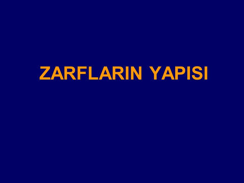 ZARFLARIN YAPISI