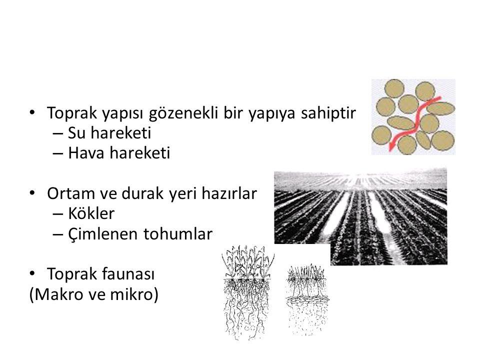 Toprak yapısı gözenekli bir yapıya sahiptir – Su hareketi – Hava hareketi Ortam ve durak yeri hazırlar – Kökler – Çimlenen tohumlar Toprak faunası (Ma