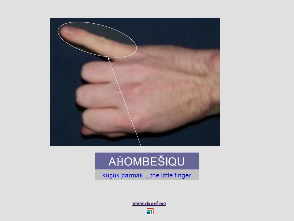 www.danef.net A Ḣ OMBE ŠERAMIU` yüzük parmağı...ring finger