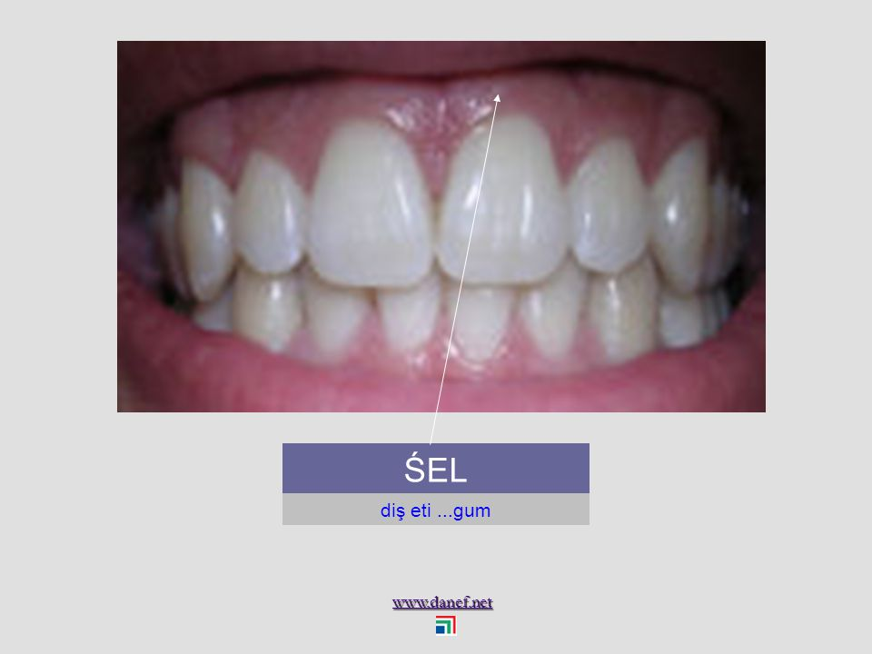 www.danef.net ŚE diş...tooth