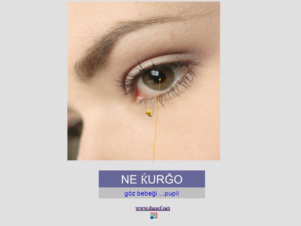 www.danef.net NA Ṕ O Göz kapağı...eyelid